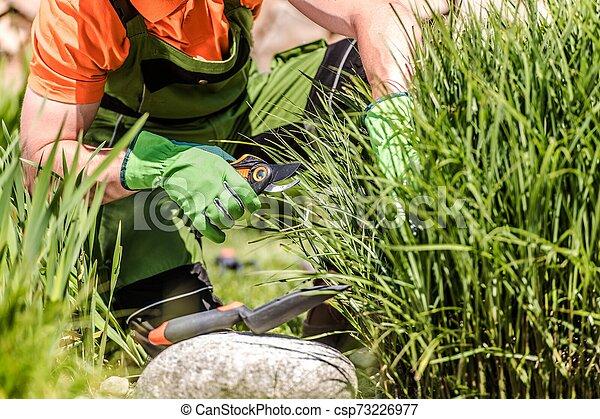 Backyard Garden Maintenance - csp73226977