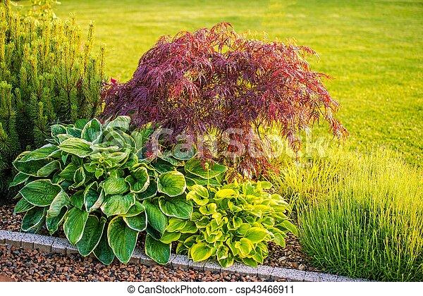 Backyard Garden Plants - csp43466911