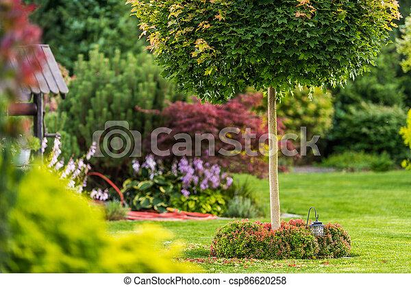 Backyard Garden Summer Vegetation - csp86620258