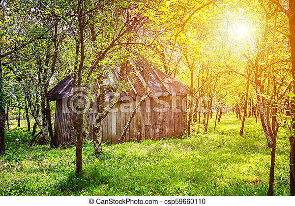 Backyard garden with small shed and trees - csp59660110
