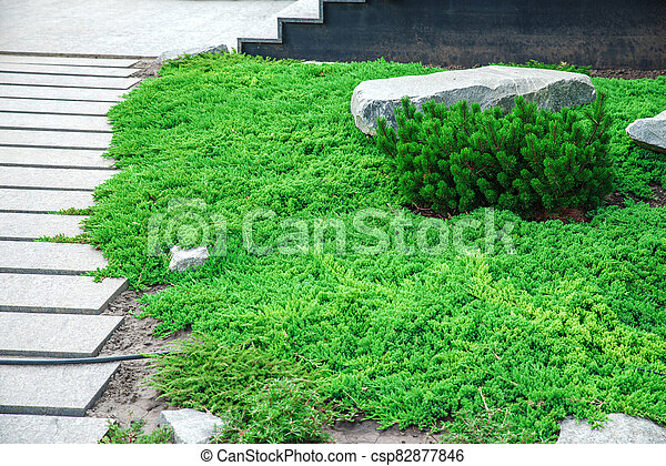 backyard with landscaping. - csp82877846