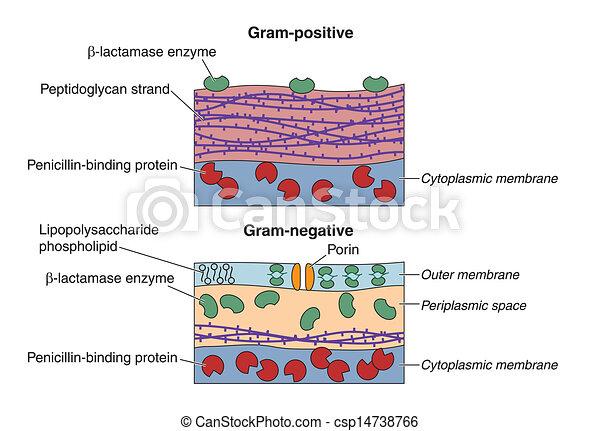 Bacteria - csp14738766