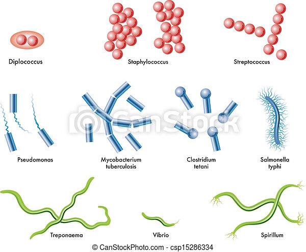 bacteria - csp15286334