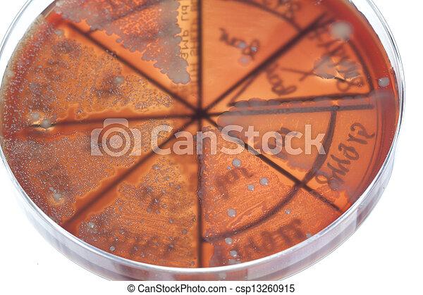 Bacteria on petri dish - csp13260915
