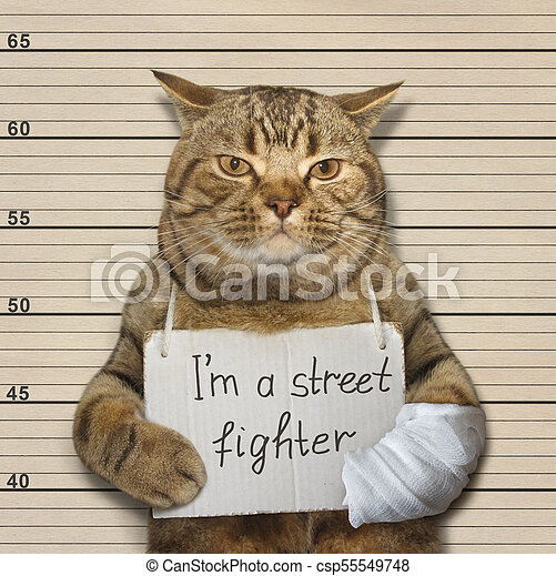 Bad cat is a street fighter. The tough cat is a famous street fighter. he  was arrested for this.