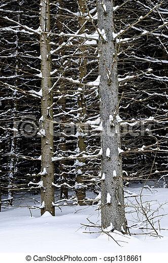 badehose, baum winter - csp1318661