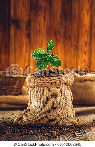 Bag of roasted coffee and coffee plant on wooden table. - csp42067645