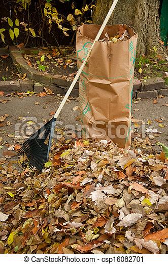 Bagging fall Leaves - csp16082701