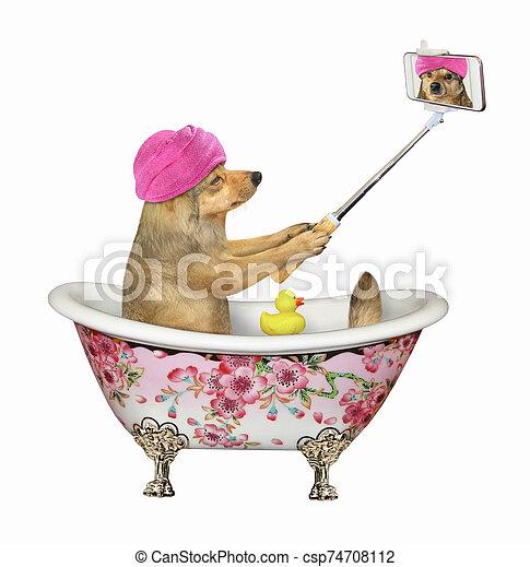 bain, marques, selfie, chien - csp74708112