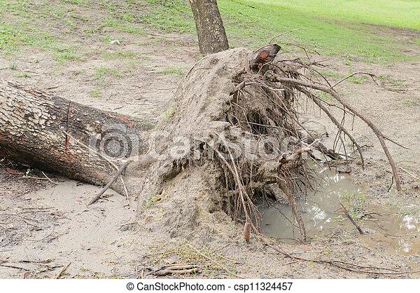 baissé, après, arbre, orage - csp11324457