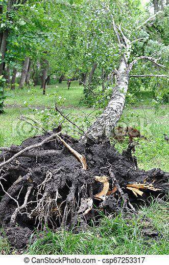 baissé, venteux, après, arbre, orage - csp67253317