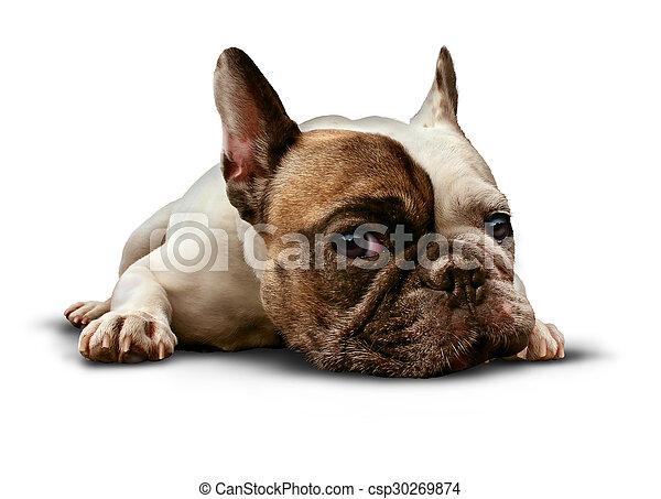 baixo, cão, mentindo - csp30269874
