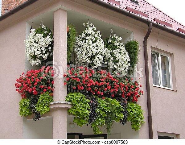 balcony flowers on balcony