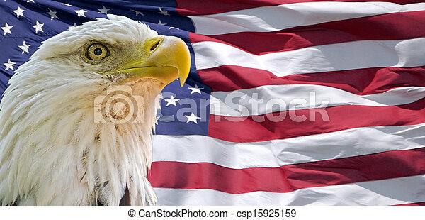 Bald Eagle and American Flag - csp15925159