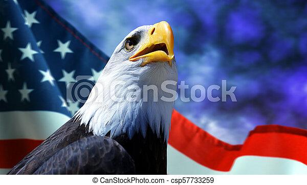 Bald Eagle and American flag. - csp57733259