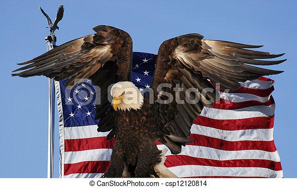 Bald eagle and flag - csp12120814