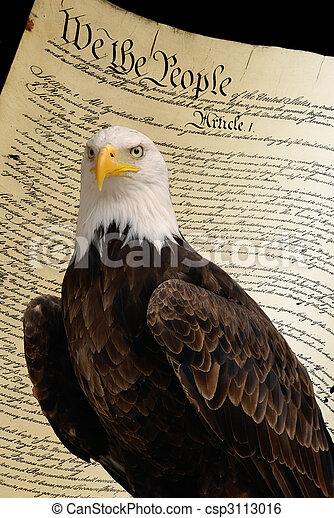 Bald eagle, constitution background - csp3113016