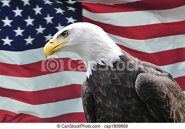 Bald Eagle looking sideways in front of USA flag - csp1809869