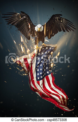 North American Bald Eagle With American Flag