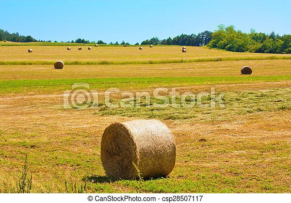 Bale field - csp28507117