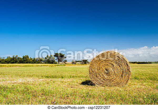 Bale hay in agriculture landscape - csp12231207