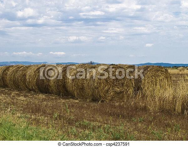 Bale of hay - csp4237591