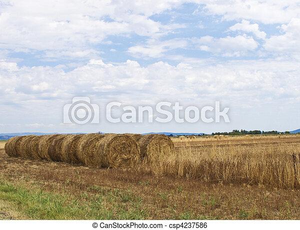 Bale of hay - csp4237586