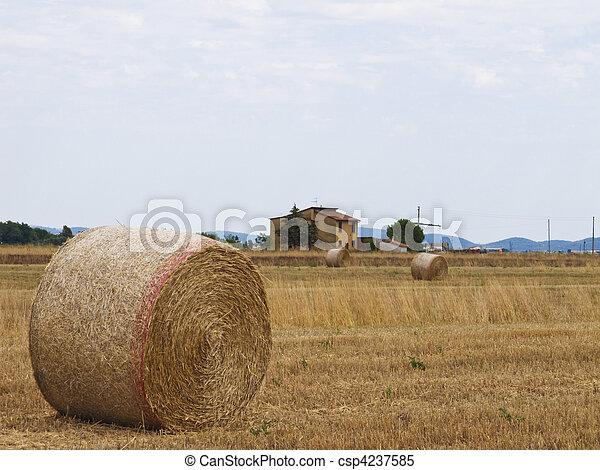 Bale of hay - csp4237585