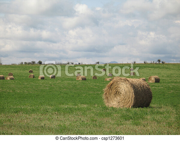 bales of hay in a field - csp1273601
