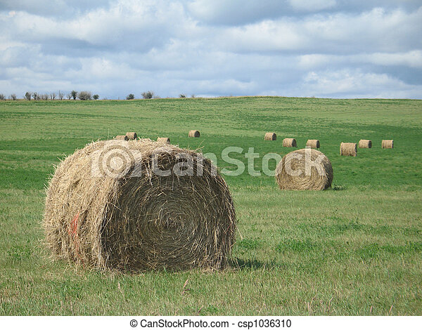 Bales of hay in a field - csp1036310