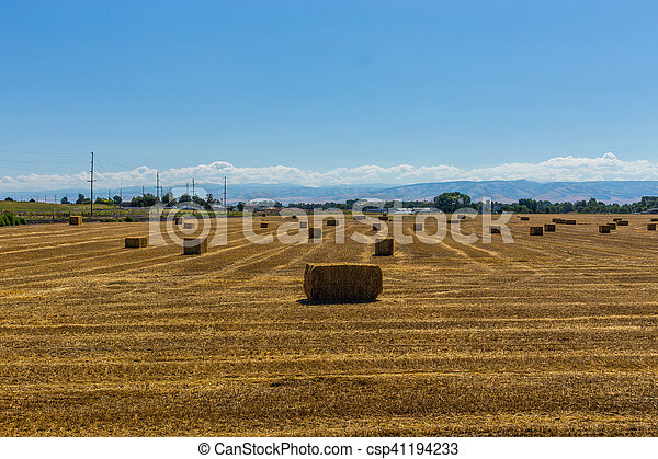 Bales of hay in a field - csp41194233