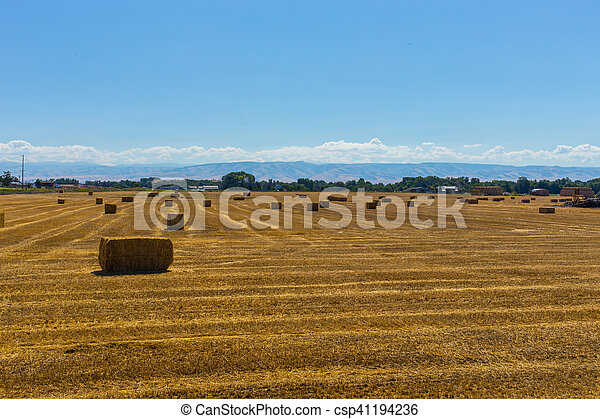 Bales of hay in a field - csp41194236