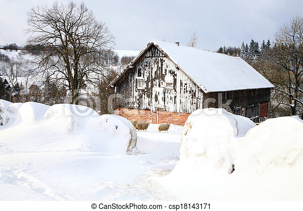 Bales of hay laying in the snow on - csp18143171