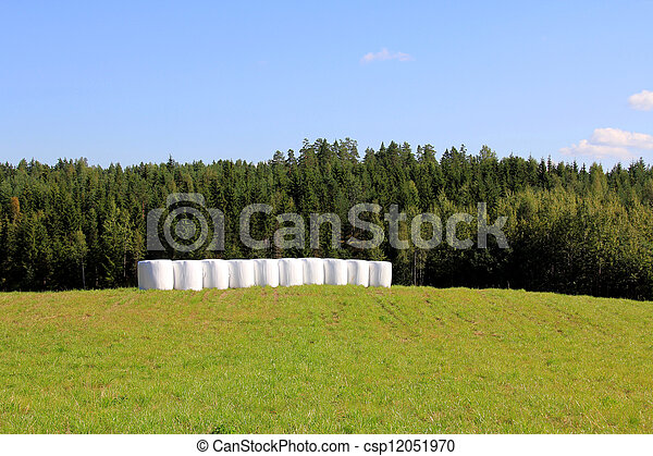 Bales of Silage on Green Summer Field - csp12051970