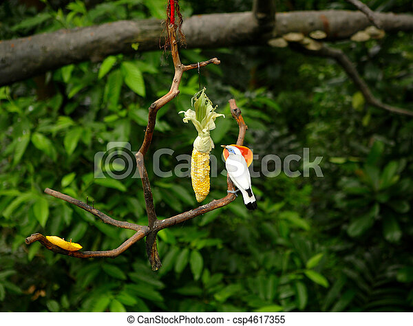 Bali Starling at zoo - csp4617355