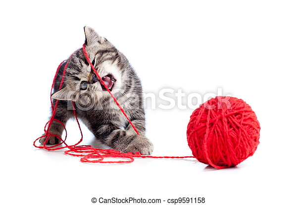 balle, tabby, clew, jouer, chaton, ou, rouges, gentil - csp9591158