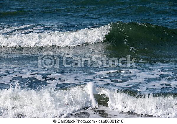 Baltic sea coast on Darss in Germany - csp86001216
