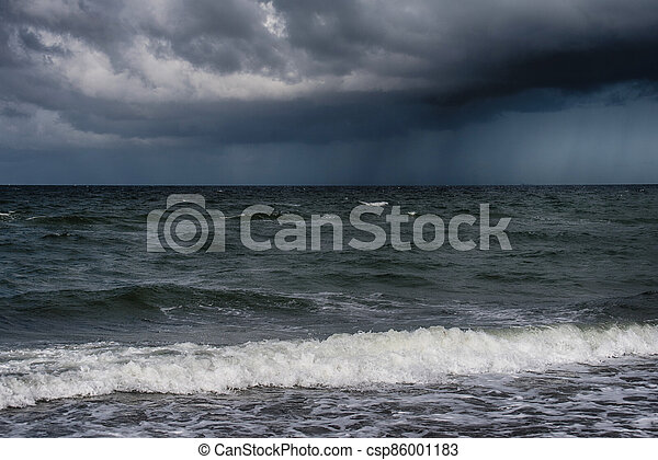 Baltic sea coast on Darss in Germany - csp86001183
