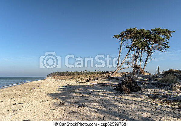 Baltic Sea Coast on Darss in Germany - csp62599768