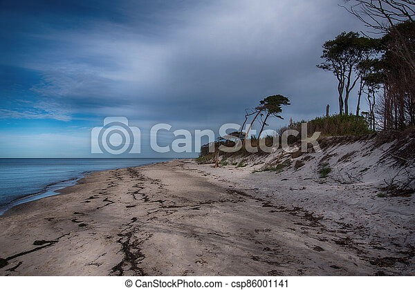 Baltic sea coast on Darss in Germany - csp86001141