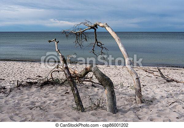 Baltic sea coast on Darss in Germany - csp86001202