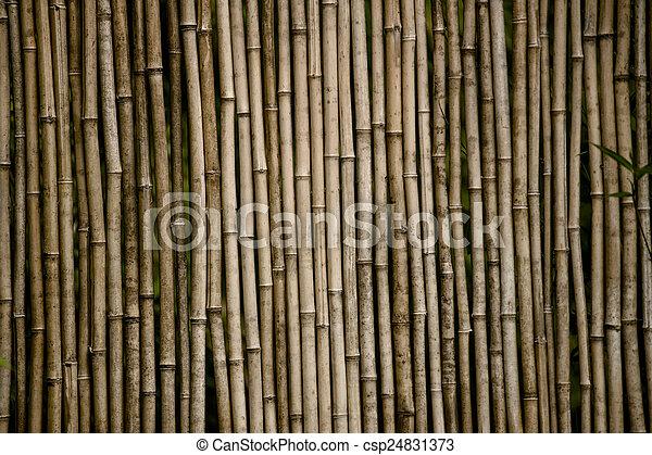 bamboo background - csp24831373