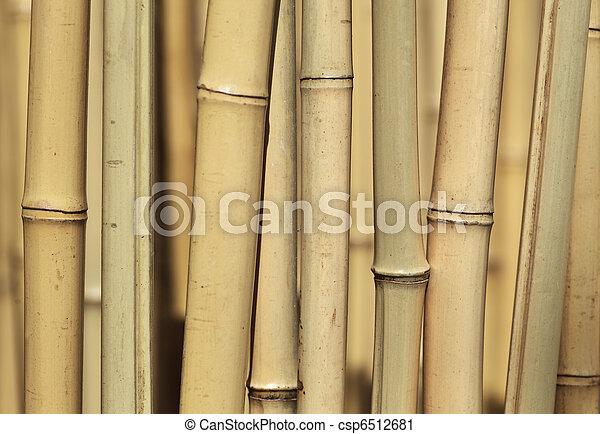Bamboo background - csp6512681