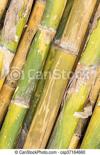 bamboo background - csp37164660