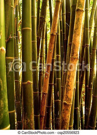bamboo background - csp20556923