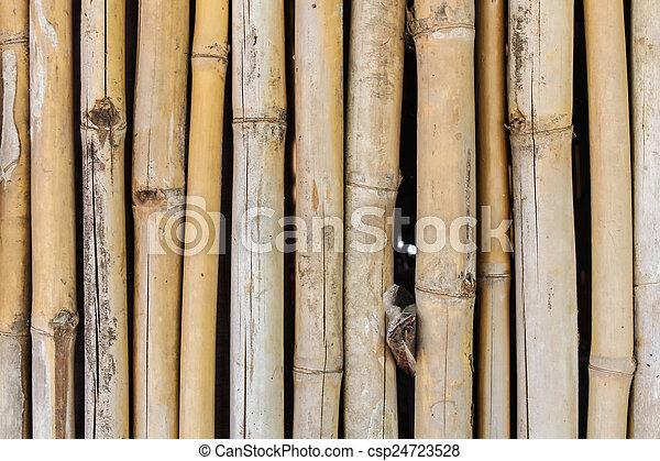 bamboo background - csp24723528