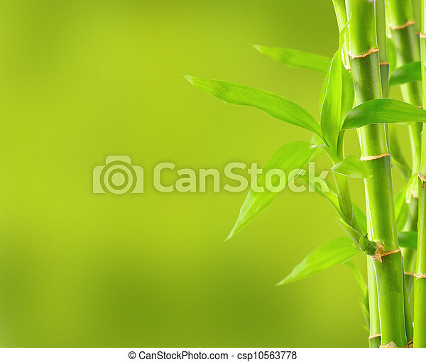 Bamboo background with copy space - csp10563778