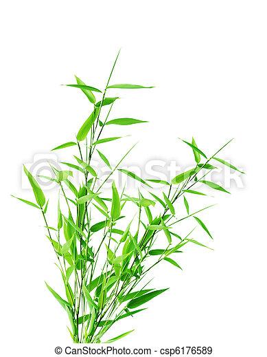 Bamboo bush - csp6176589