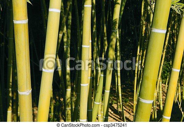 Bamboo cane green plantation - csp3475241