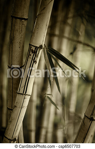 Bamboo forest background - csp6507703